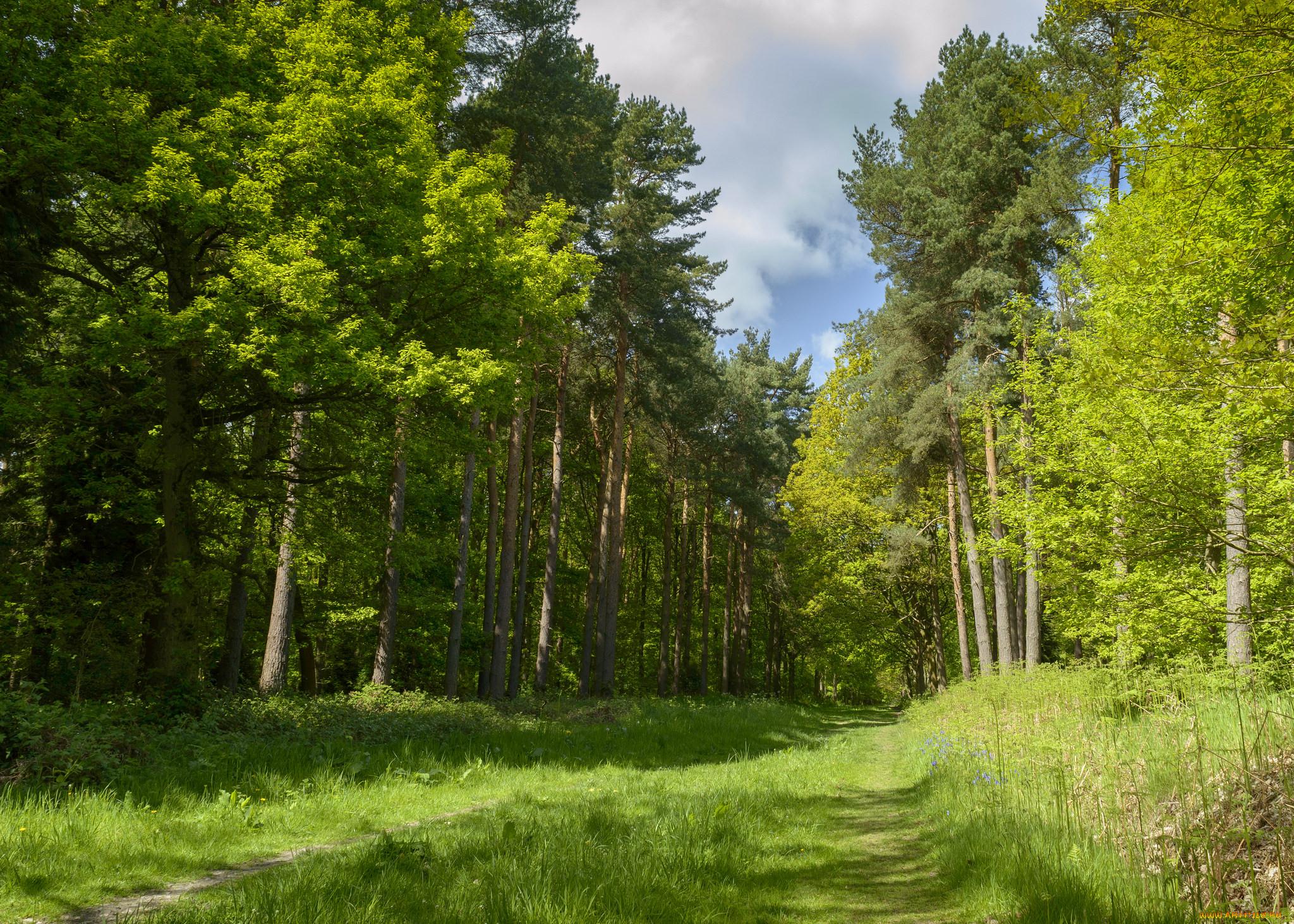 картинки лесные просторы снимке, который едва